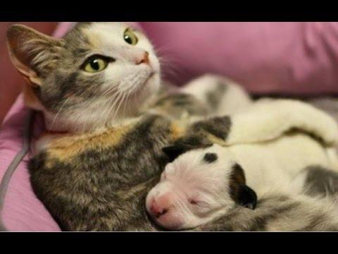 Katzen adoptieren Hunde - Katzen passen auf kleine Welpen auf.