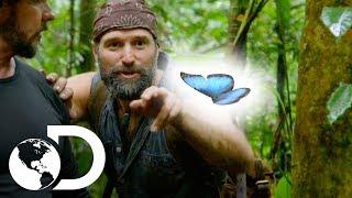 ¡Efecto mariposa en la jungla! | Desafío x 2 | Discovery Latinoamérica