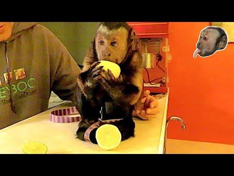 Monkey Lemon Lime FUN!