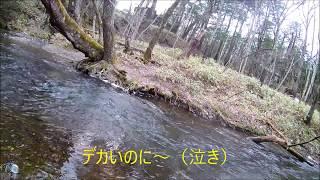 例のごとくバンブーロッド破損...2017年度 日光湯川解禁 - Opening day in Yukawa Nikkou
