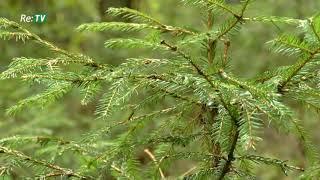 """""""Es varu būt zaļš!"""" rubrika - Mežu apsaimniekošana (28.10.2017.)"""