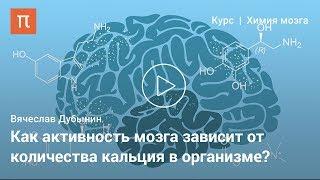 Мозг: работа синапсов — Вячеслав Дубынин