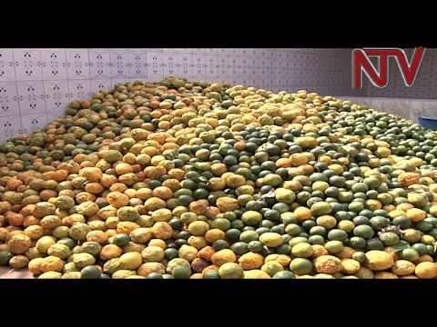 Agro-industrialisation: Measuring the possibilities in Lango sub-region