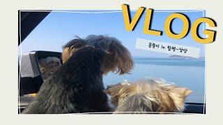 여행 VLOG | 강아지들과 함께 떠난 함평-담양 여행…
