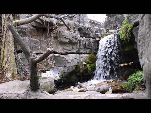 Tennessee Aquarium in Chattanooga; Cheap tickets and tips ...