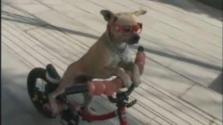 Amazing: Well-trained Dog Rides A Bike