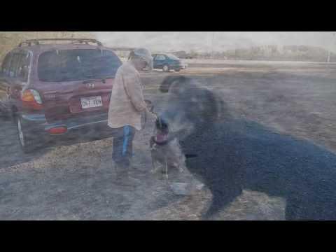 11-3-16 Jeremy - Smart Puppy!