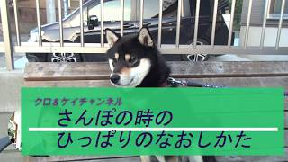 Thanks for watching. Don't forget to subscribe. 犬がリードをずっと...