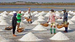 Druska, Negyvoji jūra, raudonas jūros vanduo - Vaikų enciklopedija