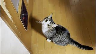 ドアが開くと信じてお父さんを見つめる猫