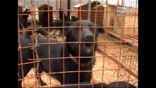 Проблему бездомных животных на курорте решат комплексно