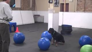 Ski Practicing Treibball Skills - Chicago Dog Training