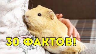 30 ФАКТОВ О МОИХ МОРСКИХ СВИНКАХ / SvinkiShow