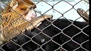 Crazy sexy threesome in the zoo!!!Секс в зоопарке!!!