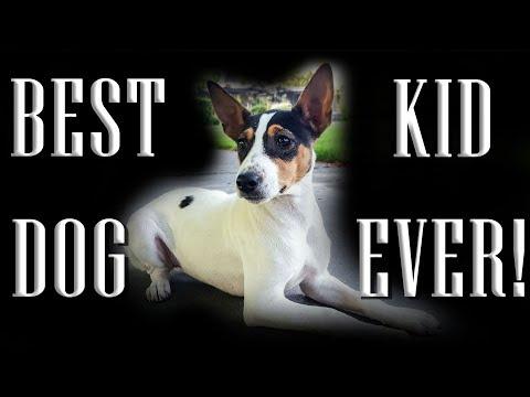BEST Family Dog EVER! Decker Terrier is Babysitting