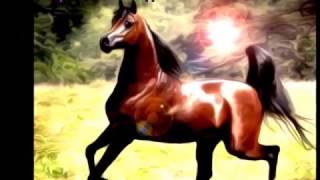 Арабские лошади маслеными красками. (Фотошоп SC6)