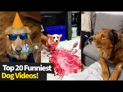 Top 20 Funniest Dog Videos | This Is Why I Love Dogs #3