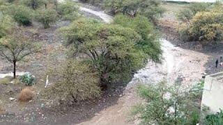 Yemen music 2014