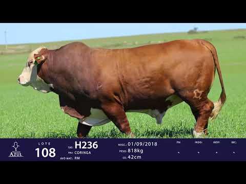 LOTE 108 - TAT H236