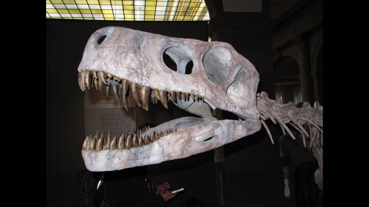Dinosaurier Ausstellung Bonn