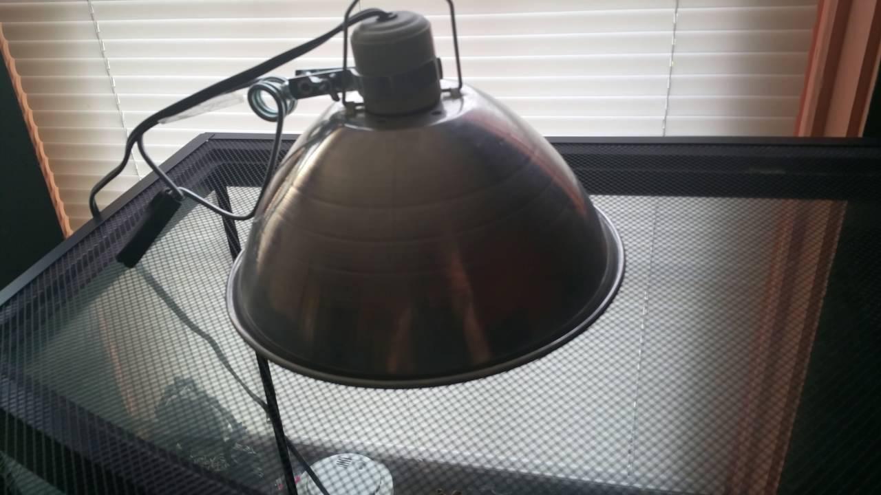 Reptile Heat Light Vs Under Tank Heater