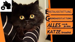 🔥Katzen Erstausstattung - Anschaffung für Katze - Checkliste und Tipps für die Grundausstattung