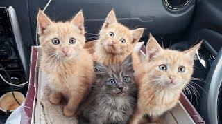 Рыжие котята в сугробе Мы не смогли пройти мимо Везем в клинику Новосибирск help kittens