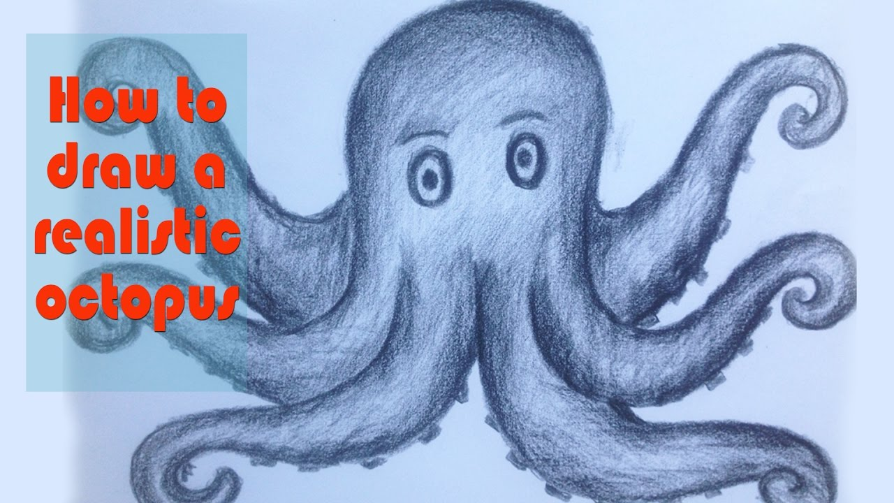 how to draw a realistic octopus awesome drawing art videos tutorial