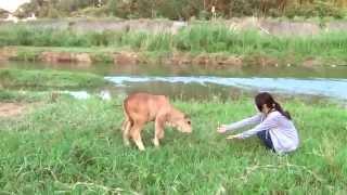 超愛撒嬌的 牛~