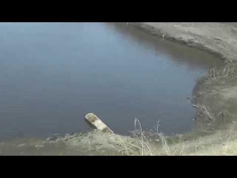 Поход за сморчками.Куда пропал пруд.Ужас около леса.