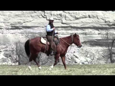 Ranch horse Streak and Cowboy Jake working cattle in Wyoming