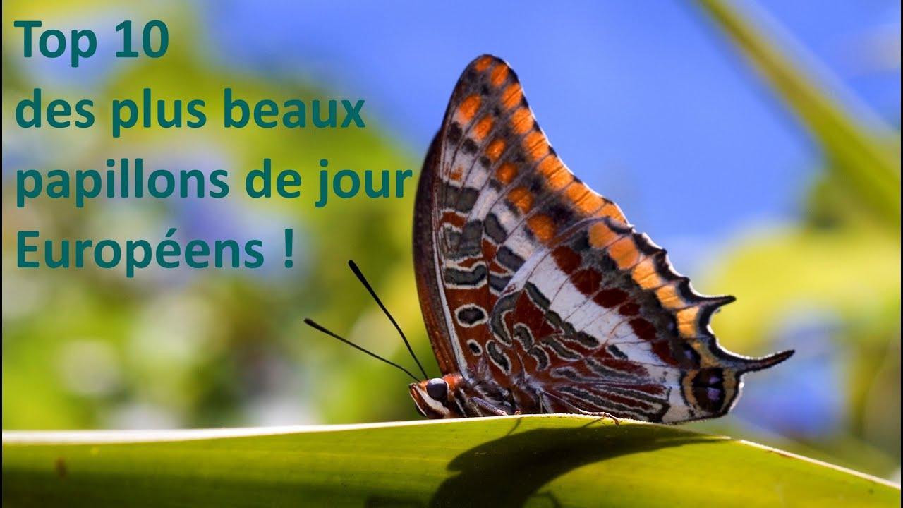 Top 10 des plus beaux papillons de jour europ ens qecc for Les plus beaux lampadaires