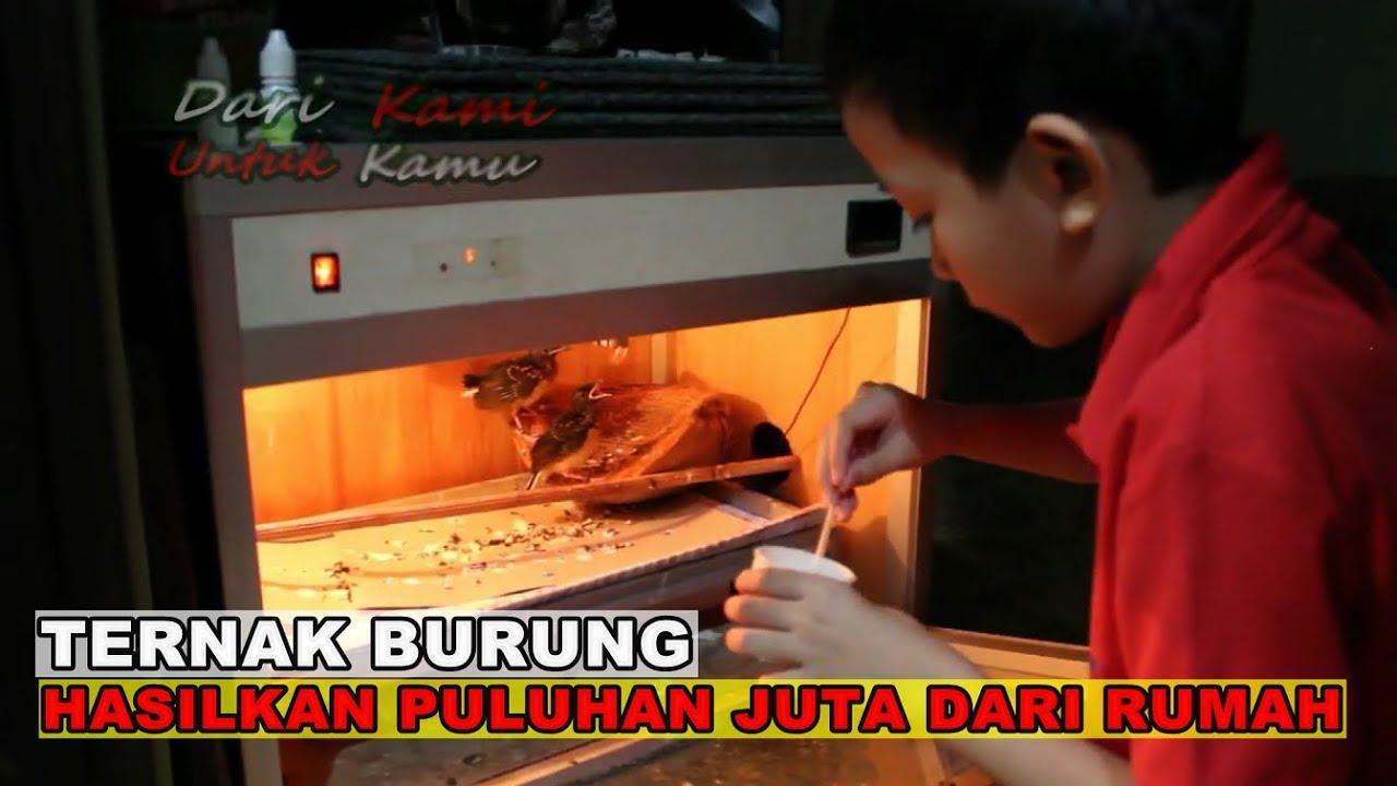 BIKIN NGILER // Cerita Sukses Ternak Burung Cucak Rowo