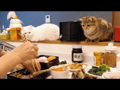 eng)-the-cats-who-are-interested-in-making-new-year-dishes!