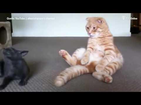 Katze Spielt Mit Schwanz