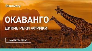 Окаванго   Дикие реки Африки   Discovery