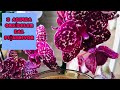 3 ADIMDA ORKİDELER DAL FIŞKIRICAK 💯🙋♀️   EBRUNUN DENİZİ Orkide Doğru Gübre Kullanımı