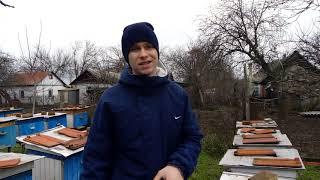 Много семей зимуют на 2 рамки пчелы на воле!!!