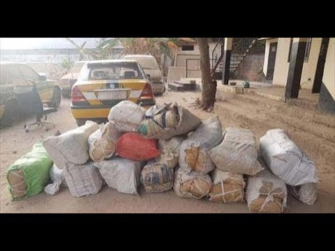 Gambia DLEAG Arrests 7 Persons For Illicit Drug Trade