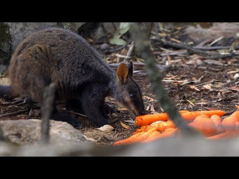 Sports Wrap with Ron Potesta - #GoodNews: Planes Drop Veggies For Stranded Animals In Australia
