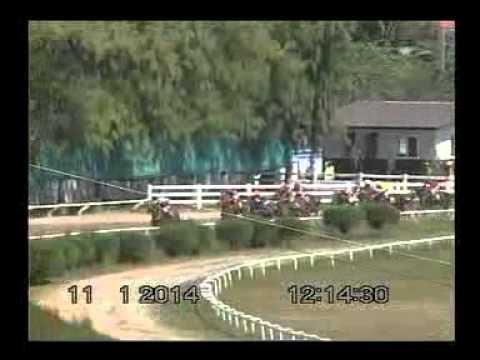 ม้าแข่งสนามโคราช เสาร์ที่ 11 มค.57 เที่ยว 1