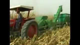 corn picking in pakistan 2012