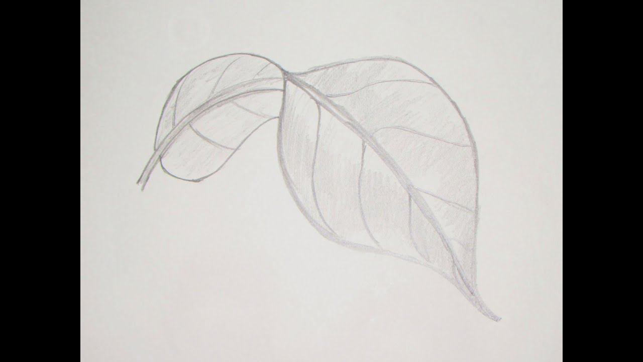 How to draw or sketch long turned mango leaf 5 youtube