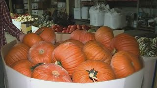The Pumpkin Patch At Sauvie Island Is Ready For Fall
