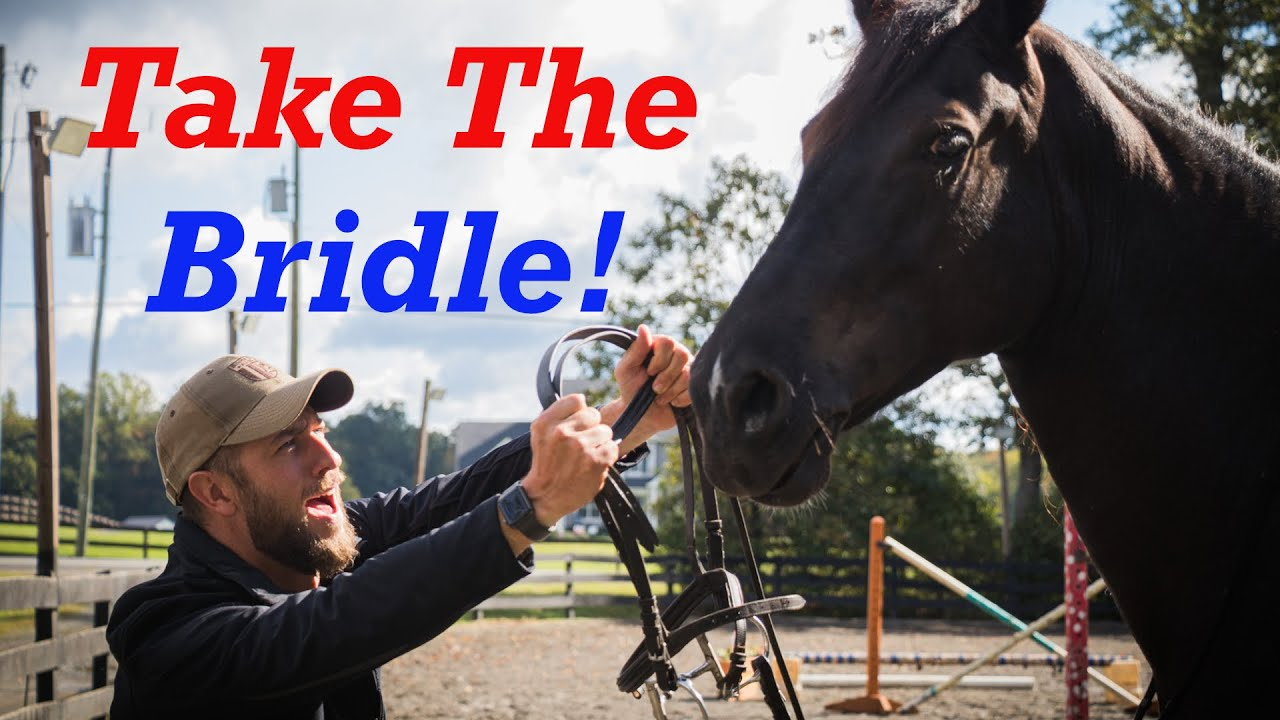How to Properly Bridle your Horse