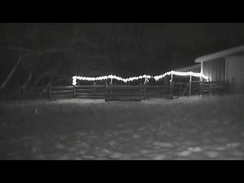 ReindeerCam Live Stream