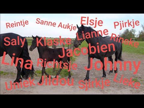 Pronounce The Friesian Horse Names In The Frisian Language!