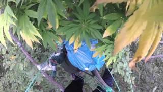 Treetop grow | Branko Krstič