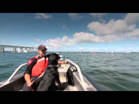 SEARCHDOG official trailer / Seattle Film Festival