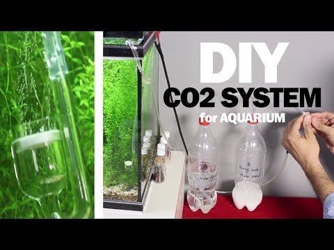 DIY: CO2 System For Aquarium (easy and cheap)
